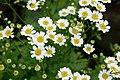 In Bloom (127586473).jpeg