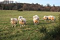 Inquisitive Sheep - geograph.org.uk - 670584.jpg