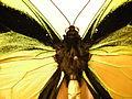 Insect Safari - lepidopteran 019.jpg