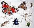 Insectum.rovarok.jpg