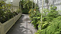 Inside of Botanic Gardens in Glasnevin.jpg