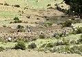 Isla del sol - panoramio (1).jpg