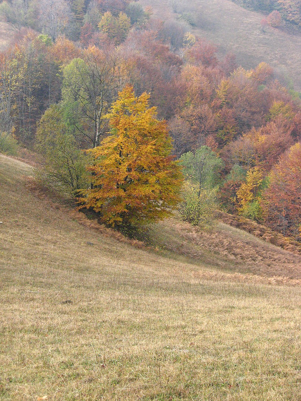 Jablanik - zapadna Srbija - mesto Debelo brdo - Na putu ka vrhu Jablanika - Detalj 106