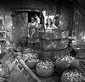 Jabolka v korbah (košarah), pripravljena za prešanje, Petrušna vas 1950.jpg
