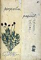 Japanese Herbal, 17th century Wellcome L0030105.jpg