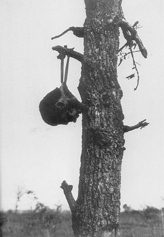 American mutilation of Japanese war dead - 1945 image of a Japanese soldier's severed head hung on a tree branch, presumably by American troops.