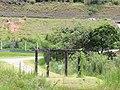 Jardim Santa Rosa, Itatiba - SP, Brazil - panoramio (4).jpg