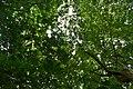 Jardin des plantees et de la nature de Porto Novo 13.jpg