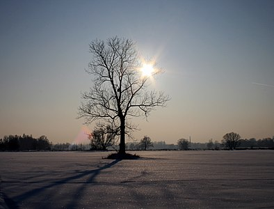 Winter 2010 in central Europe