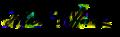 John H. Clifford signature.png