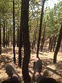Jungle near Bheem Pakora Lansdowne.jpg