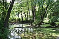 Junglee - panoramio.jpg