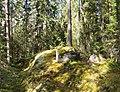 Jyväskylä - forest in Touruvuori.jpg