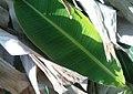 K.Pudur Village Banana Leaf.jpg