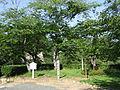 Kakuzan-koen2254.jpg