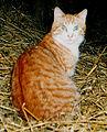 Kass.jpg