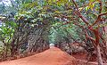 Kasturba Rd, Matheran, Maharashtra 410102, India - panoramio (12).jpg
