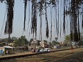 Katwa to Ahmedpur Narrow gaugue railway 15.jpg