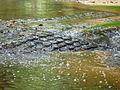 Kbal Spean - 008 Water Rushing over the Lingas (8584736712).jpg
