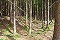 Keltenschanze bei Deisenhofen - geo.hlipp.de - 9908.jpg