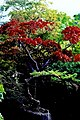 Kildare - Japanese Gardens - geograph.org.uk - 1605057.jpg
