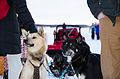 King's Dog's looking Regal in their Glory (8407338012).jpg