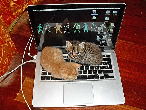 Kitten Laptop