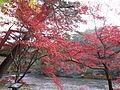 Kobe Municipal Arboretum in 2013-11-16 No,13.JPG