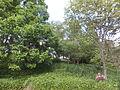 Kobe Municipal Arboretum in 2013-6-22 No,25.JPG