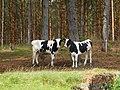 Kolno, Poland - panoramio (13).jpg