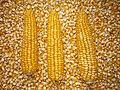 Kukuřice loupaná a neloupaná.jpg