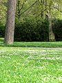 Kyjov mestsky park 01.jpg