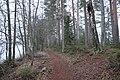 Kyynäränharju, Liesjärven kansallispuisto, Tammela, 15.11.2014 (2).JPG