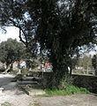 Lápida Camilo José Cela baixo a oliveira 2.jpg