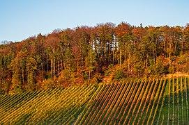 Löwenstein - Wolfertsberg - Weinberge und Waldrand im Oktober (2).jpg