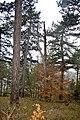 LSG Sudmerberg - Herbstwald (4).jpg
