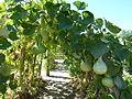 La Bussiere Garden 03.jpg