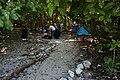 Lady Musgrave Island campsite - panoramio.jpg