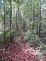 Lambir Hills National Park - trail.jpg