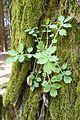 Lasy okolice Miaczynka (9).JPG