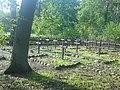 Leśny cmentarz wojenny 1915 r - panoramio (1).jpg