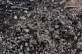 Lichen (39685000815).jpg