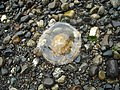 Life at Owen's beach - panoramio.jpg