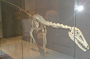 Liliensternus - Skeleton restoration