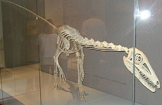 Liliensternus - Skeleton restoration