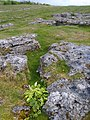 Limestone Pavement - geograph.org.uk - 1310407.jpg