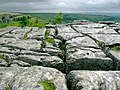 Limestone pavement above Malham Cove - geograph.org.uk - 872144.jpg