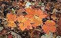 Lingering Autumn (2) (10792183333).jpg