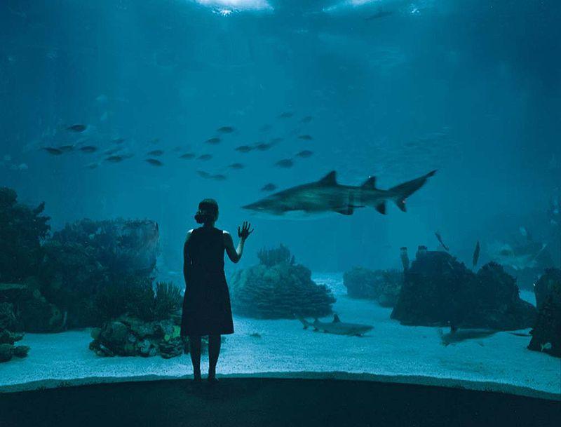 Lisbon Oceanarium.jpg