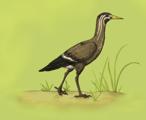 Lithornithidae - Life restoration of Lithornis.